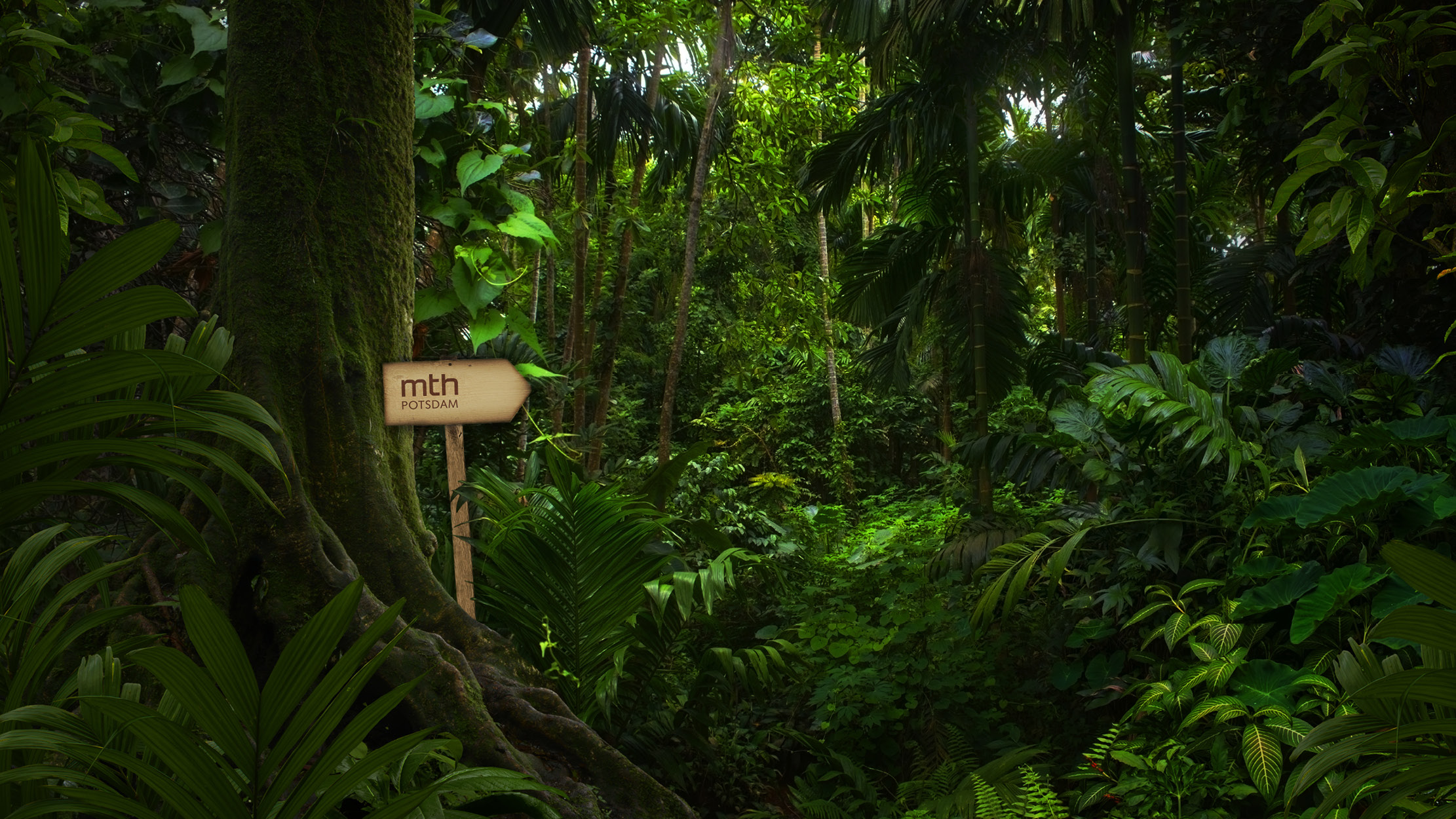 2020-mth-screen-jungle-1
